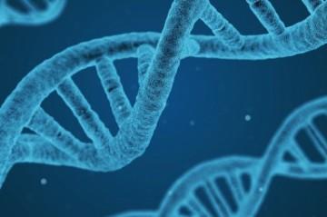 Nuevo modelo de ratón para la enfermedad celíaca para acelerar la investigación sobre tratamientos